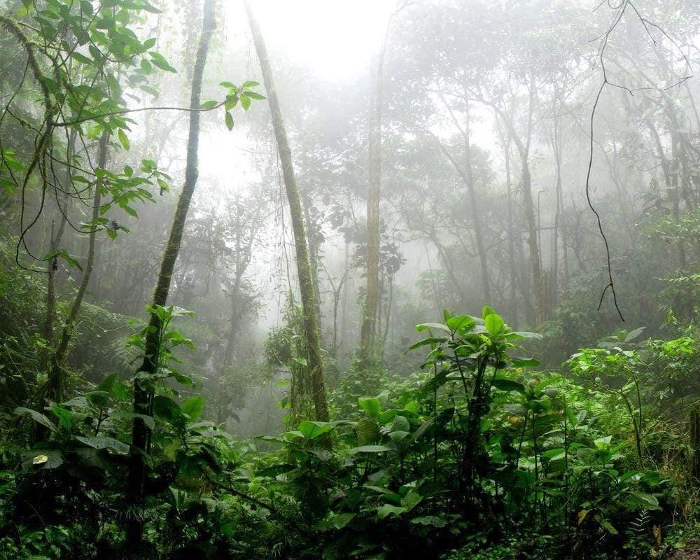 Brazil-rainforest_2000x