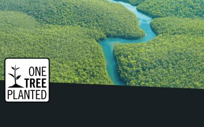 Drvo po drvo – obnavljamo brazilsku prašumu